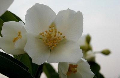 fiori_darancio