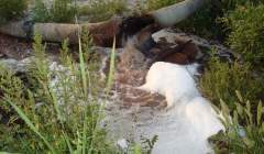inquinamento-falde-liquami