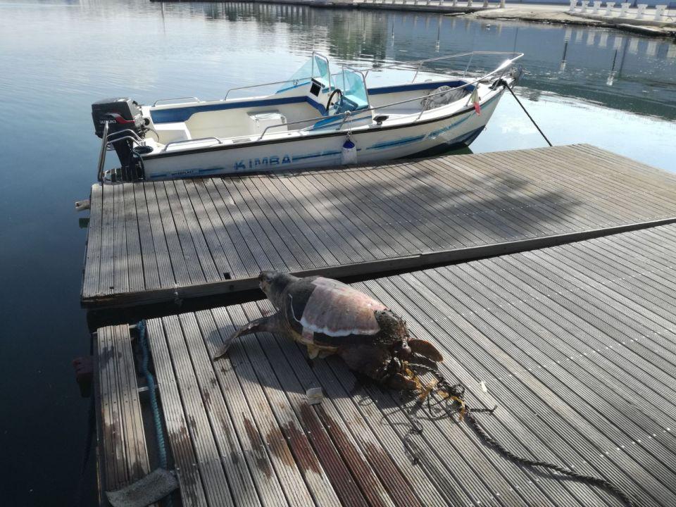 BioEcoGeo_tartaruga Taranto2