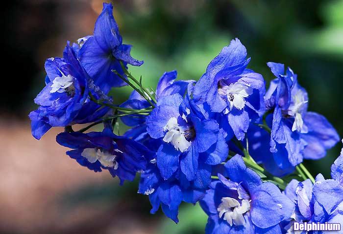 Tall Purple Flowers Small Purple Flowers To 25 Purple Flower Names