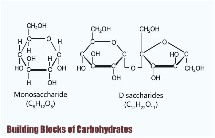 Building Blocks of Carbohydrates Types, Properties  Functions