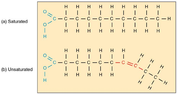 Building Blocks of Lipids Structure,Function,Examples of Lipids