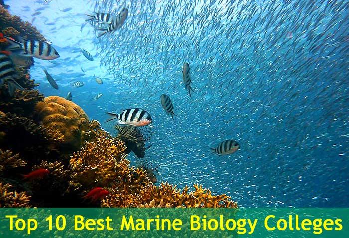 Top 10 Best Marine Biology Colleges in the USA BioExplorerNet