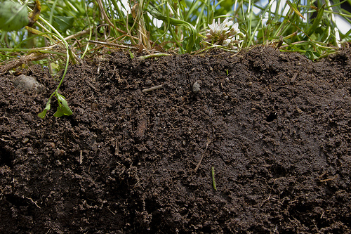 How to kill your soil