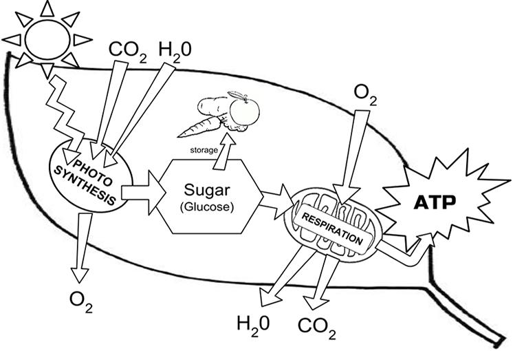 energy schematic diagrams