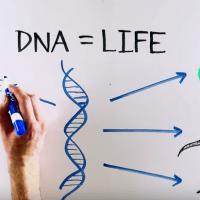 Βίντεο: το πείραμα των Meselson–Stahl
