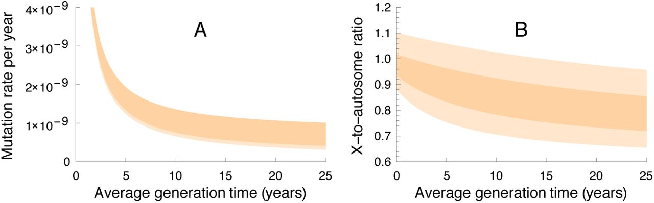 Life history effects on the molecular clock of autosomes and sex