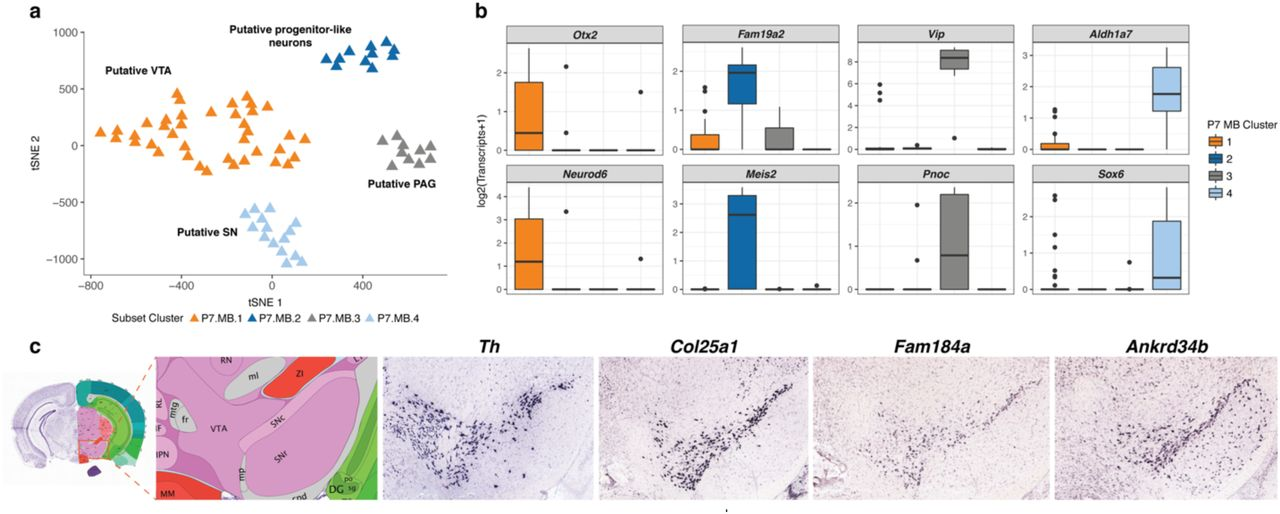 Temporal and spatial variation among single dopaminergic neuron