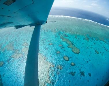 Coral reefs future brighter
