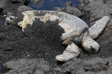 turtle shells, turtle, shell, digging,