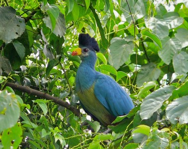 Restoring rainforests to their former condition is highly successful in helping tropical bird communities recolonise damaged habitat.