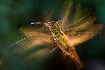 Bird Photographer of the Year Awards 2015