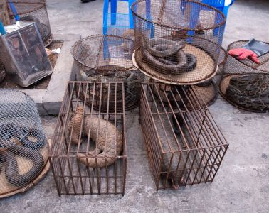 myanmar_illicit_endangered_wildlife_market_04