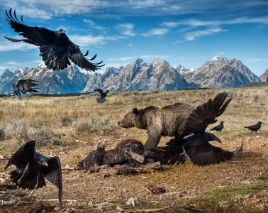 charlie-hamilton-james_wildlife-photographer-of-the-year-mammals-finalist