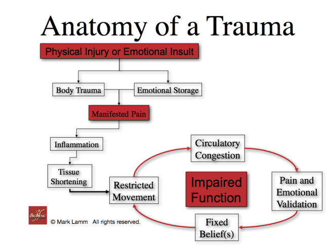 Anatomy of a Trauma