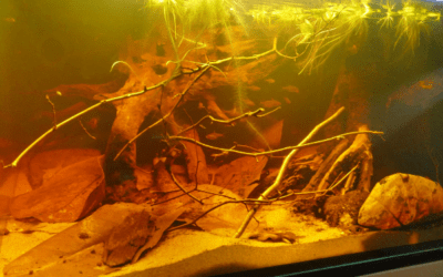 Igapo Rio Negro Amazon Biotope Aquarium Biotope One