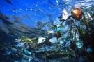 plasticinwater