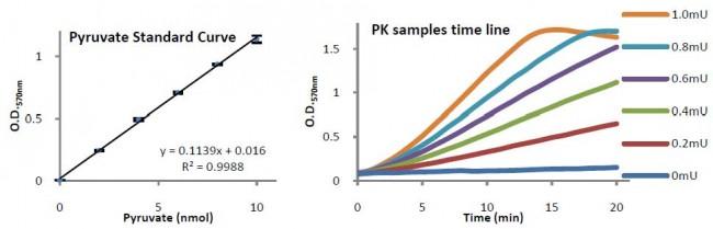 Pyruvate Kinase Activity Colorimetric/Fluorometric Assay Kit K709