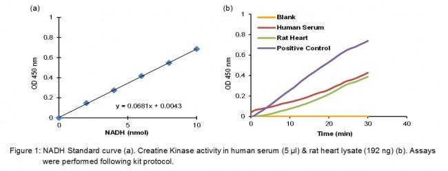Creatine Kinase (CK) Activity Colorimetric Assay Kit K777
