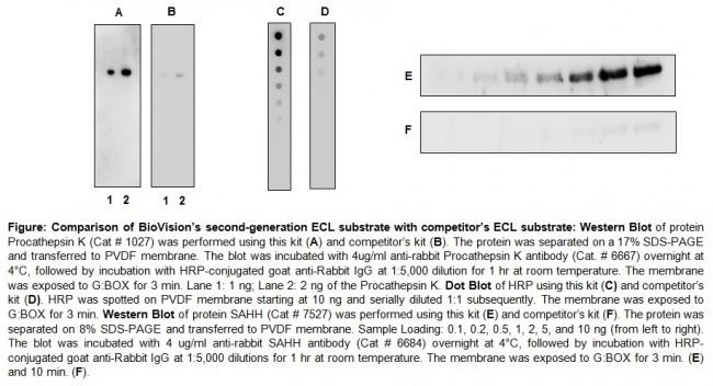 SuperBrite™ ECL Western Blot Substrate/Detection Kit K824