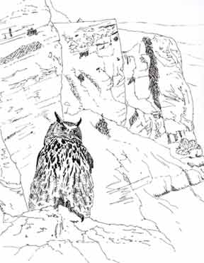 eagle owl illustration
