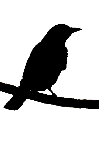 Bird silhouette 3