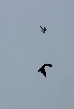 Flying birds in Spain