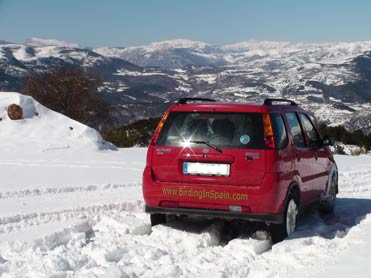 Birding in Spain in the snowy Pyrenees.
