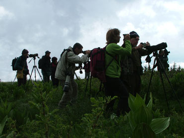 Spanish birders birding in Bulgaria
