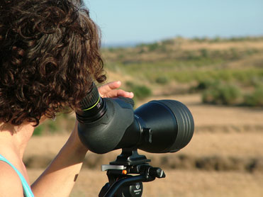 Birdwatching tours to Barcelona and the Ebro Valley plains and steppes