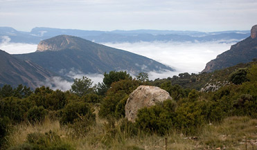 Boumort Nature reserve