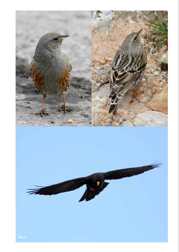 Birding trip report images from Pyrenees and northeast Spain