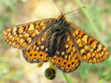 The Birding In Spain butterfly list of 2014