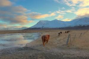 horses-andrew-maranta
