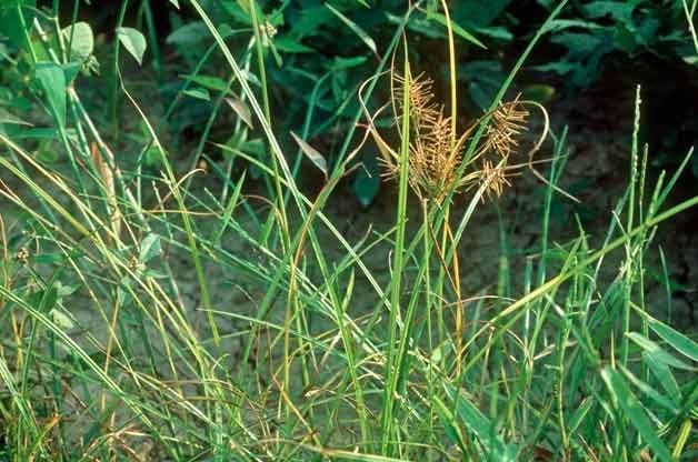Gardening Basics: Identifying Weeds In Your Garden - Birds And Blooms