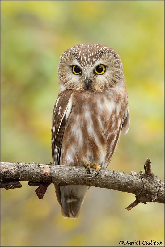 Cute Owl Wallpaper For Mac How Dan Cadieux Masters Canon Eos 7d Image Files 171 Arthur