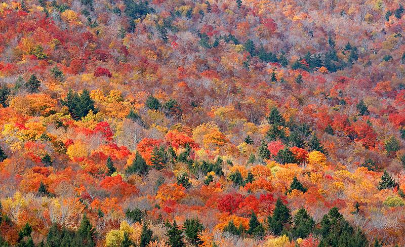 New England Fall Wallpaper Birds As Art Bulletin