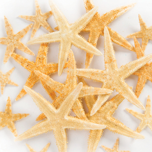 star fish decoration for mermaid party