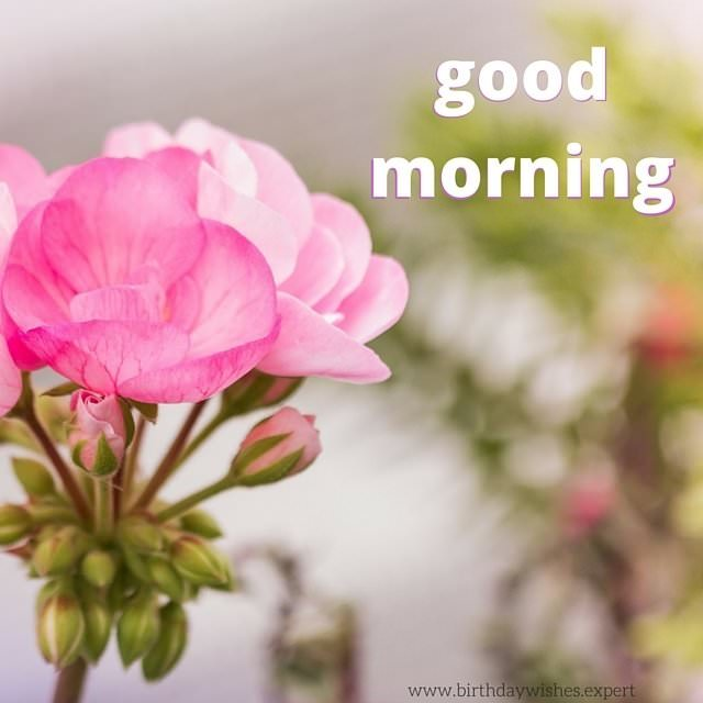 Pinterest Desktop Wallpaper Lotus Quote 60 Good Morning Images With The Most Beautiful Flowers