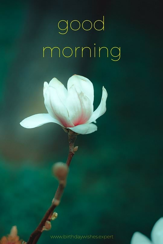 Beautiful Quotes For Friends With Wallpaper 60 Good Morning Images With The Most Beautiful Flowers