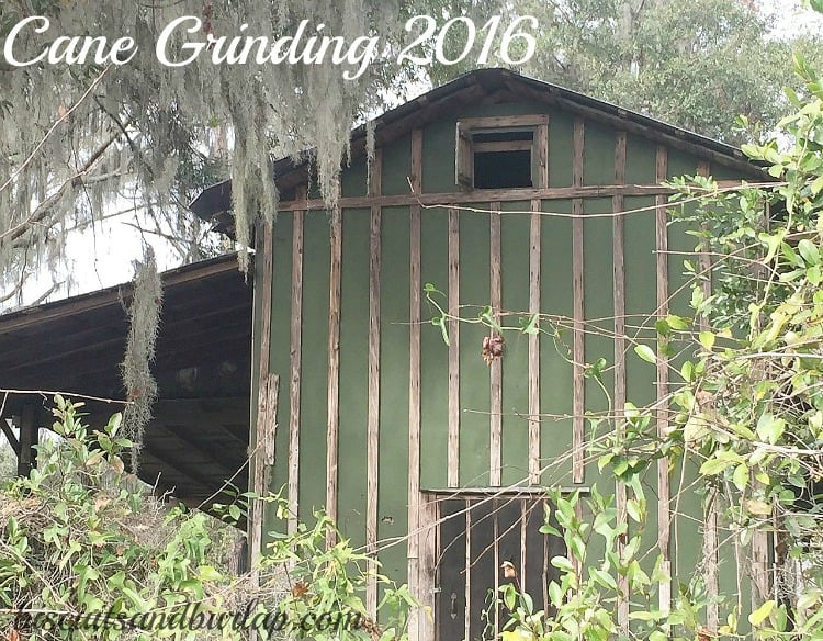 cane-grinding