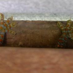 Ein großer Gecko versteckt sich in unserem Bad.