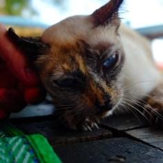 Unsere süße Bungalow-Katze.