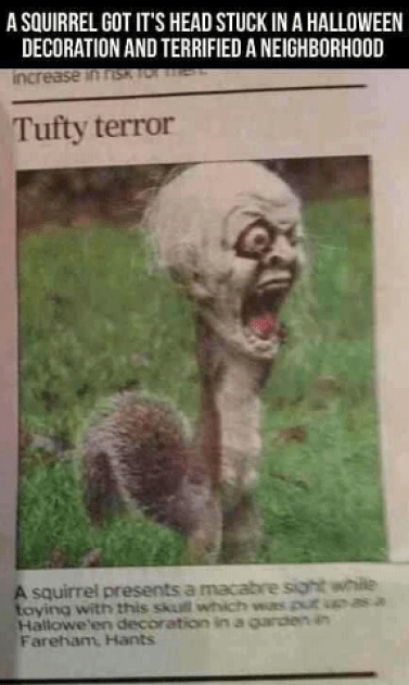 Squirrel monster