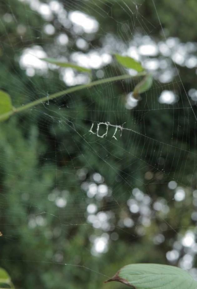 Spider lol