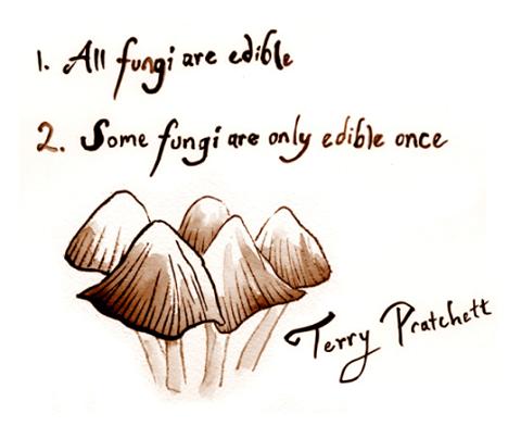 all-fungi-are-edible