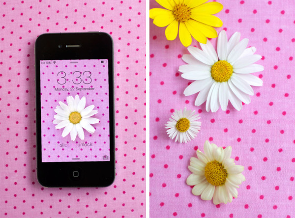Spring Iphone 6 Wallpaper Daisy And Polka Dot Iphone Desktop Bit Square