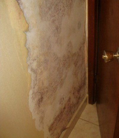 Do It Yourself Mold Remediation ...........Personal Safety, Removal Protocol
