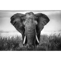 African Elephant Tempered Glass Wall Art - 120cm x 160cm ...