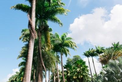 Blanccoco_Photographe_Martinique_Rhum_Clement_Depaz_Saint_Pierre_Grand_Riviere-57